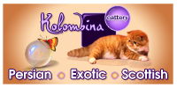 Persian and Exotic cats and kittens KOLOMBINA CATTERY